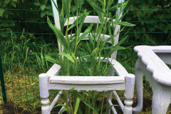 A chair from Room to Grow by Freedom Baird; native plantings intertwine with salvaged furniture in a small garden designed to prompt conversation about the interaction of humans and nature.